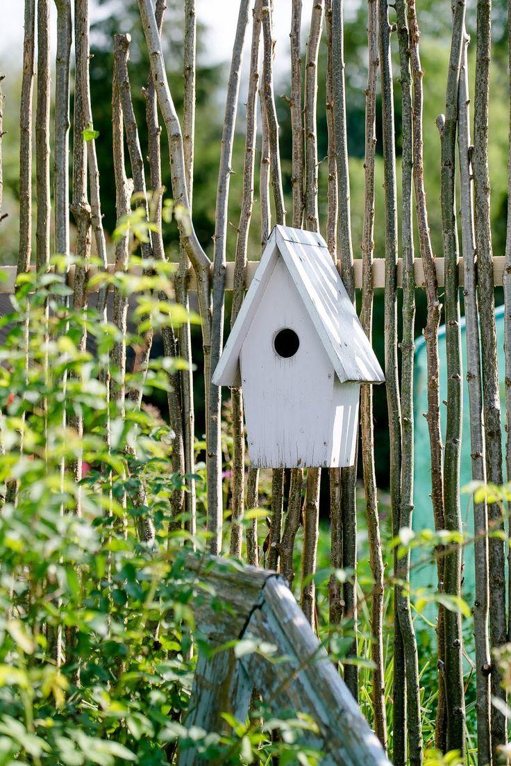 Visual Protection Or Unconventional Trellis Diy Gardening Diy