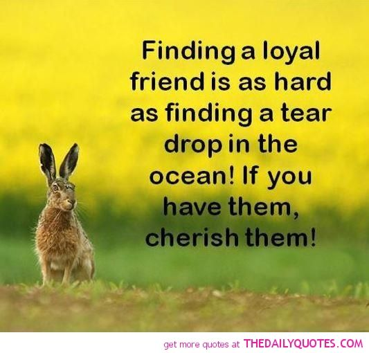Quotes About Friends: 25+ Best Loyal Friend Quotes On Pinterest