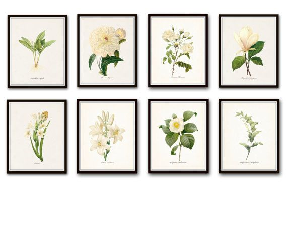 WHITE BOTANICAL PRINT SET PRINT SET NO.8 - GICLEE CANVAS PRINTS  This print set features 8 antique white botanical illustrations by the renowned