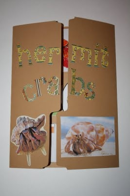 hermit crabs learning folder... great non-fiction pictures and information