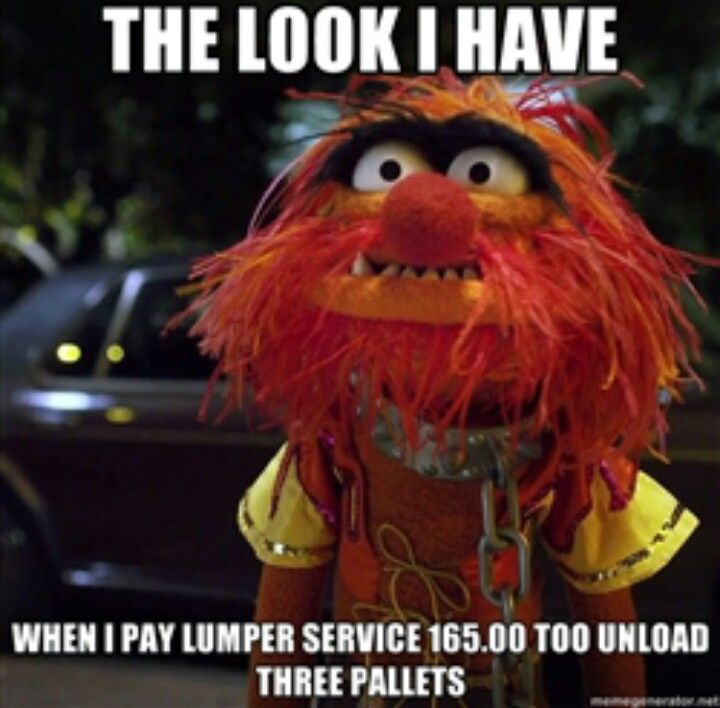 39 Best Muppet Quotes Lol Images On Pinterest: 48 Best Animal (muppet ) Quotes Images On Pinterest