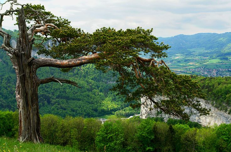 На вершине Штокхорн, Швейцарские Альпы. Обсуждение на LiveInternet - Российский Сервис Онлайн-Дневников