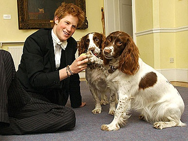 Bichos de estimação e a realeza britânica