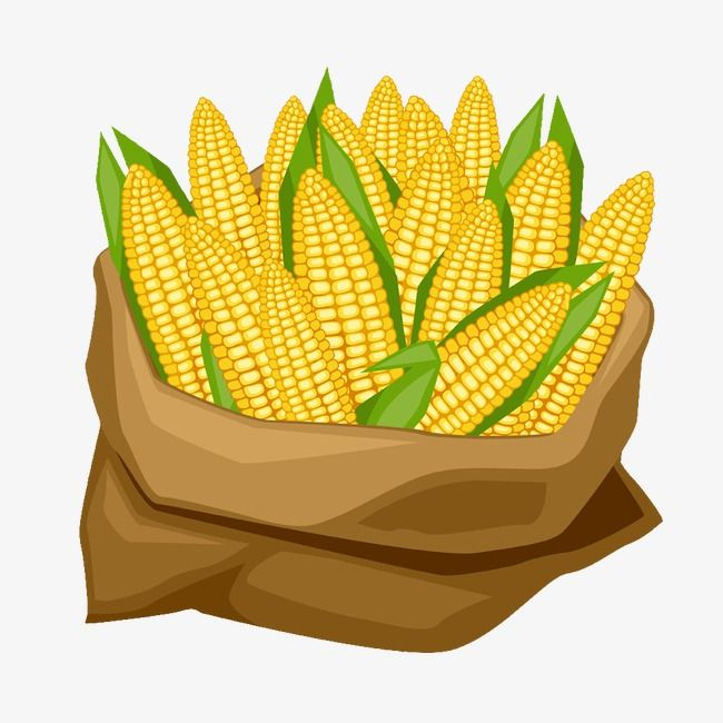 Sacks Of Corn Png And Clipart Corn Food Illustrations Corn Plant
