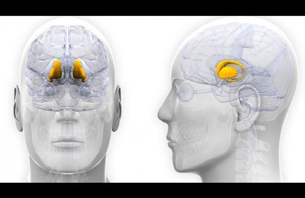 Londres, 26 Jul (Notimex).- Las células madre del cerebro podrían ser la clave para extender la vida y retardar el envejecimiento, pues éstas se encuentran en el hipotálamo que produce hormonas y otras moléculas que pueden revitalizar la disminución de la función cerebral y la fuerza muscular. Una investigación estadunidense publicada este miércoles en la …