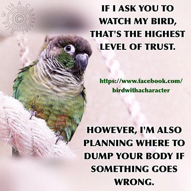 Pin By Ma Hammad On Best Pet Birds Parrot Quotes Conure Bird Parrot