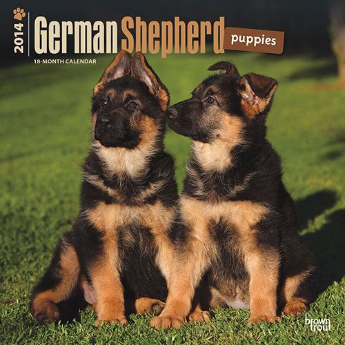 German Shepherd Puppies Wall Calendar: With pointed ears and fuzzy fur, German Shepherd puppies are handsome little dogs. They are a joy to watch play, and a joy to hug. Already you can see the incredible poise and intelligence that will make them such wonderful companions when they reach adulthood. http://www.calendars.com/German-Shepherds/German-Shepherd-Puppies-2014-Wall-Calendar/prod201400003576/?categoryId=cat10014=cat10014