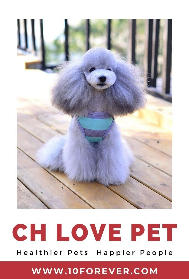 Pin On Ch Pet Supplies Products
