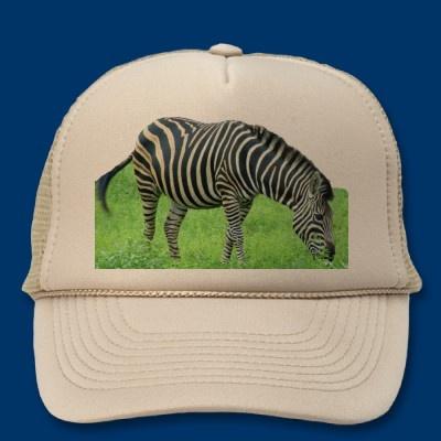 Zebra Safari Hat  Going on a Safari?