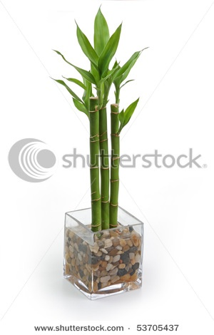bamboo house plant for kitchen