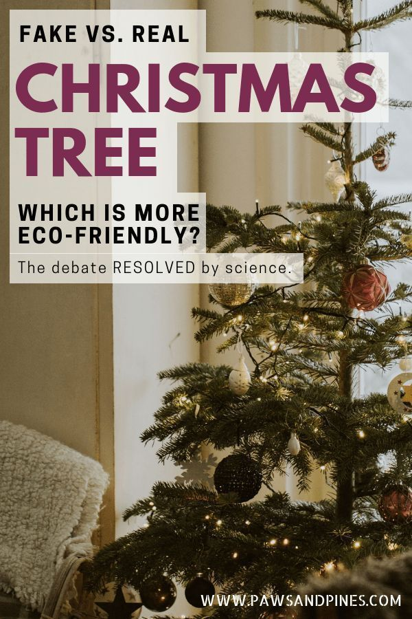 The Best Kind of Christmas Tree Is    ? Natural Holiday Ideas