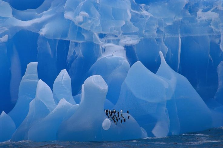 A group of chinstrap penguins rides an iceberg through the Weddell Sea, where the Endurance sank in 1915. Eric Dietrich/ Hedgehog House/Minden Pictures/National Geographic Creative