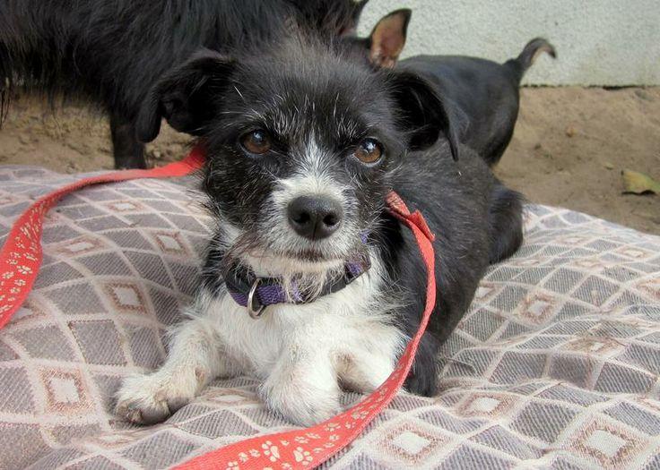 Arf Dog Rescue Fresno