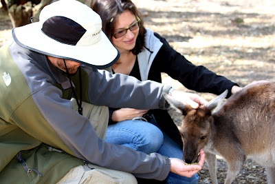 Petting a baby kangaroo at the Peel Zoo near Perth, Western Australia. Oh, the cuteness!