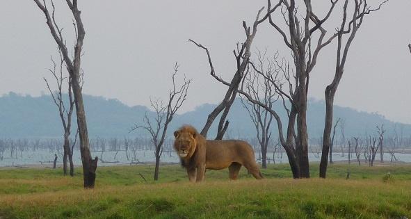 Zambia, Kafue National Park