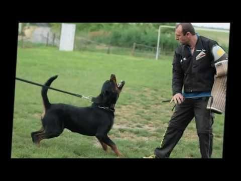 Rühlwaffe Rottweiler kennel - Hungary