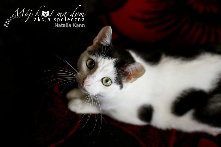 Mój kot ma dom - Akcja społeczna: IV.070