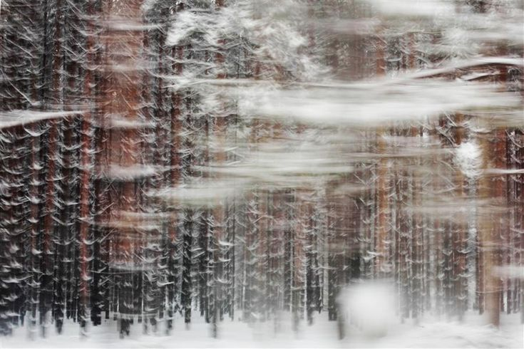 Love this photography from UGallery. Pines by Maria Plotnikova