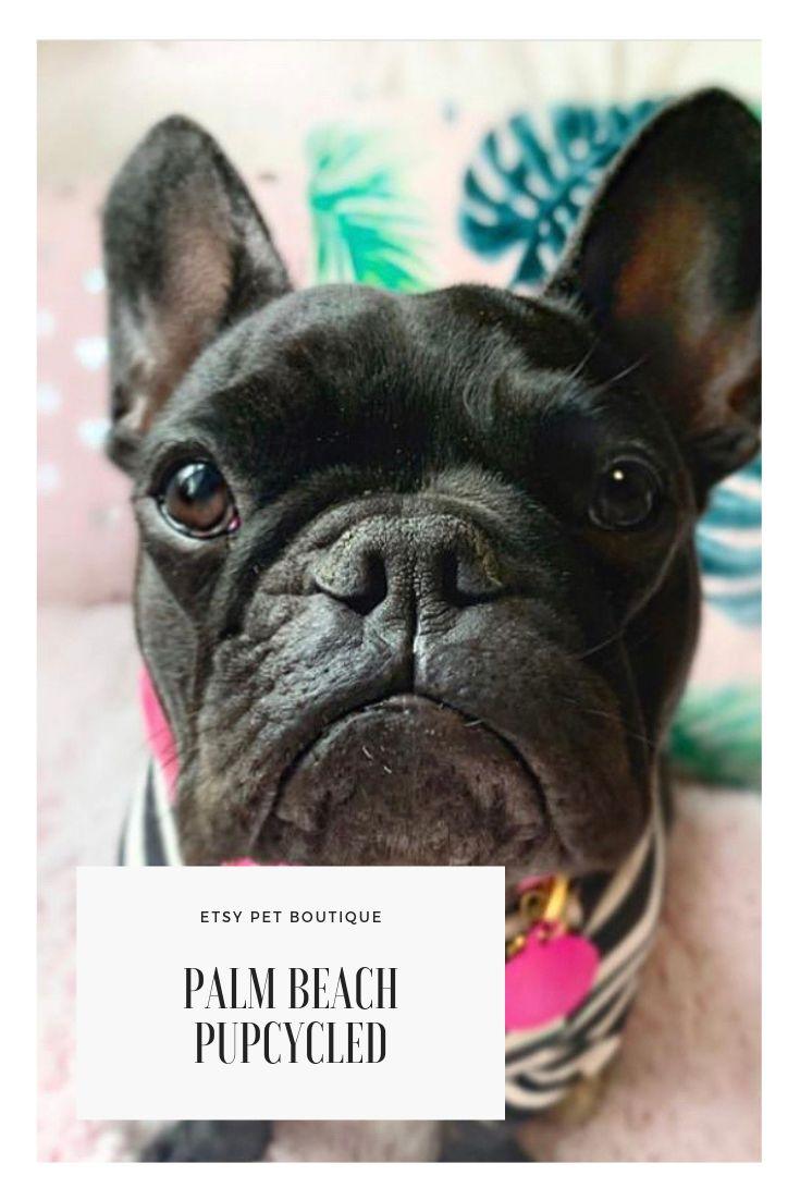 Adorable black french bulldog models bright pink custom