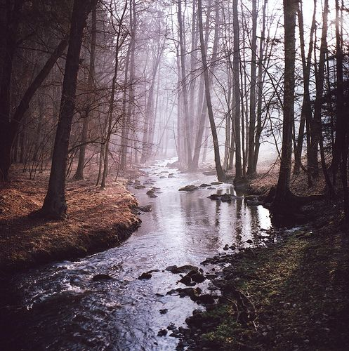 The woods. Reminds me of the stories I read as a girlForests, Living Water, Dreams Places, Wood, Bible Reading, Rivers, Robert Frostings, Nature Beautiful, Photography