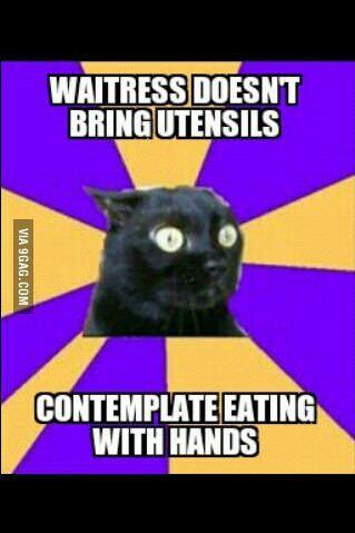 Social anxiety cat