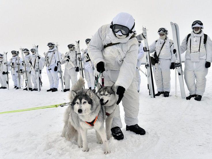 He aquí por qué los soldados rusos están a caballo alrededor del Ártico en trineos tirados por Renos