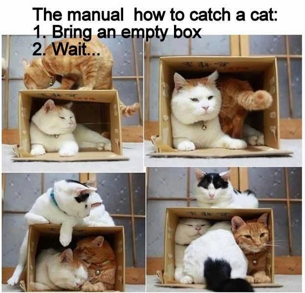 How to catch a cat...@Kylie Hizey @Stephanie Nanez