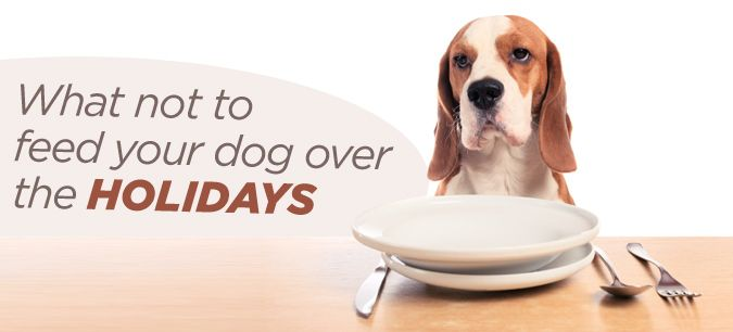 To avoid the gassy, messy aftermath that sharing your meal can bring, train your dog (and your guests) to behave at the table. #holidays #pets #dogs