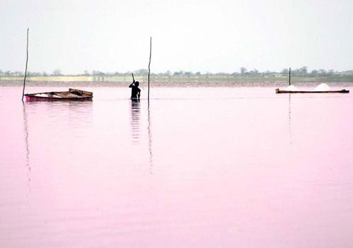 Pink Waters- Lake Retba in Senegal | Dynamic Africa