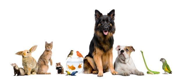 Animal Pet Doctor