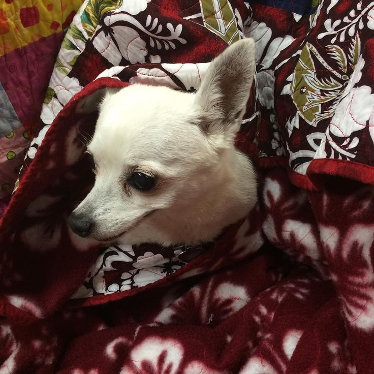 And the thunder rolls...Yes #rainydays are cuddle days. Pixxie is glad I'm home and am sharing one of my #quilts