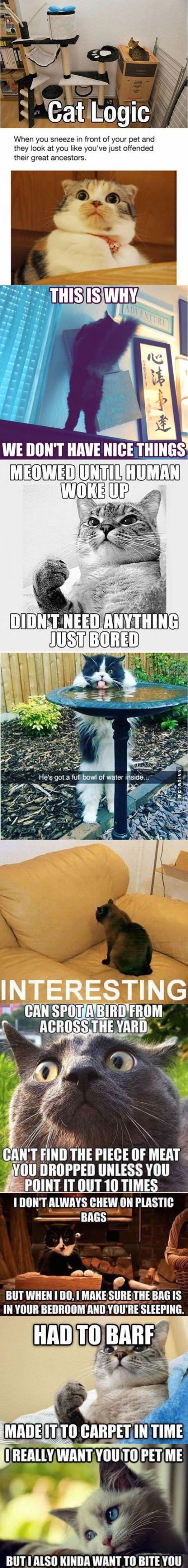 Cat Logic, it all makes sense to me. I want that cat at the bird bath!!!