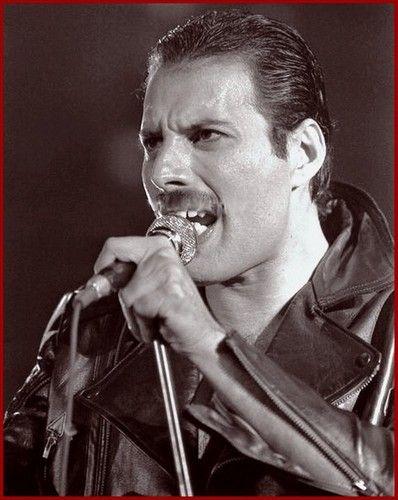 Freddie - freddie-mercury Photo
