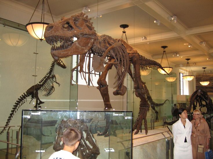 Google Image Result for http://cdn.enjoyourholiday.com/wp-content/uploads/2011/11/Explore-The-Natural-History-Museum-Of-New-York-City-3.jpg