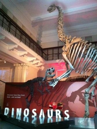 The AUSTRALIAN MUSEUM has 3 levels of exhibitions covering the areas of animal science, mineral science and cultures such as Skeletons, Birds & Insects, Planet of Minerals and Indigenous Australian. It also has the popular & kid-friendly Dinosaur Space, Kidspace (for under 5s) and the Search & Discover Area.