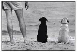 Elliott Erwitt Dogs | Art : Elliott Erwitt: Dog Dogs | Kalamazoo Institute of Arts (KIA)