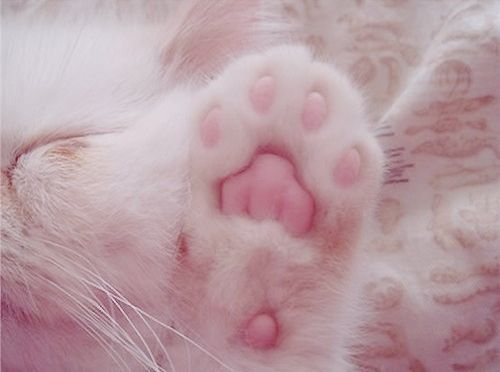 kitty pink paws
