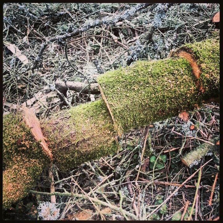 Lumberjack trick.