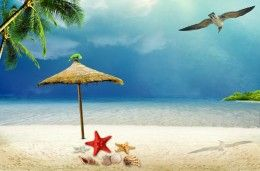 Обои Чайка Морские звезды Ракушки Небо Море Пляж Зонт Песок Пальмы Природа Животные