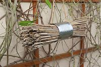 Nisthilfe für Wildbienen. Dazu wird Schilf auf Länge geschnitten und in einer Konservendose gebündelt. In die hohlen Stängeln können Wildbienen ihre Eier legen.