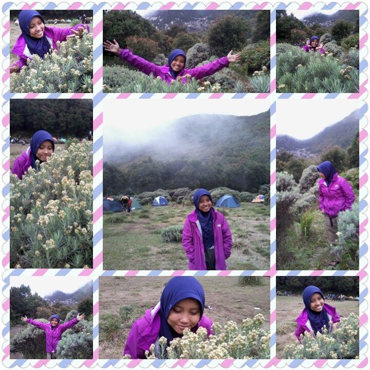 edelweis di pos pondok saladah gunung papandayan