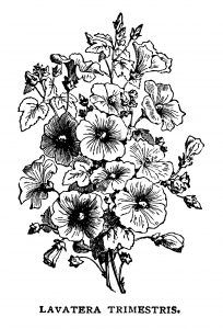 Free vintage bouquet of flowers black white clip art