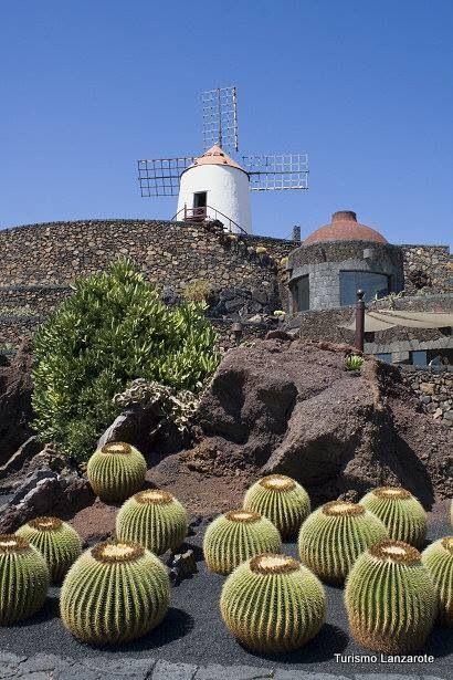 estos cactus son de Lanzarote España toma ya que gigantes