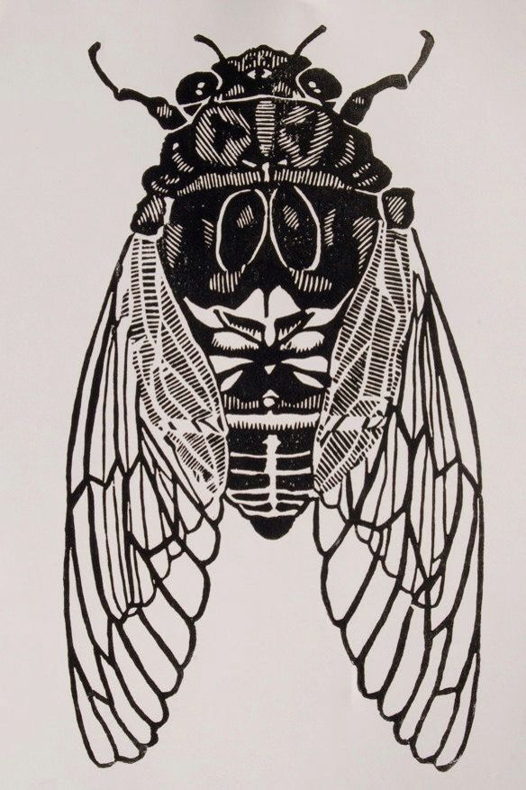 Cicada, by Christopher Wassell. Contemporary
