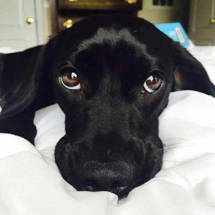 Esos ojos !!!!!!!!!