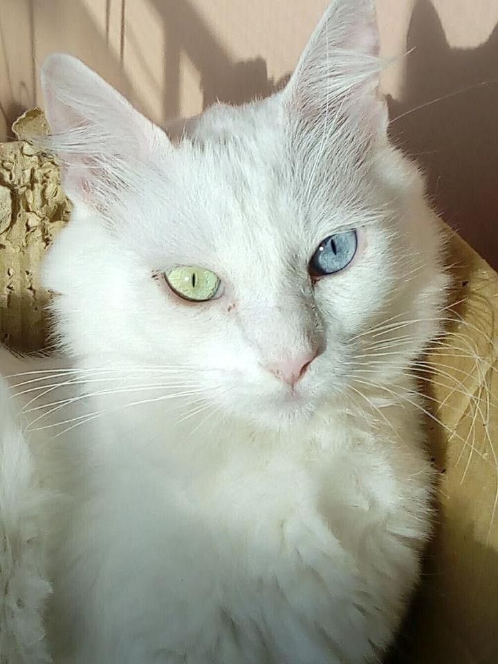 Sonogattivostri Stars Pro Cute Animals Cats Beautiful Cats