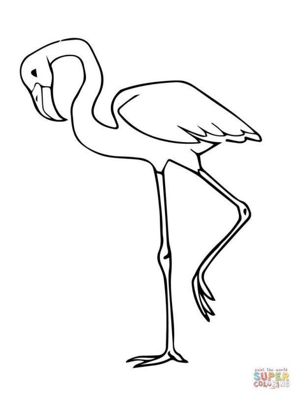 Flamenco Para Colorear Flamenco Animal Dibujo Flamenco Dibujo Dibujos Para Imprimir