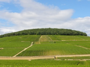 Corton hill, Bourgogne