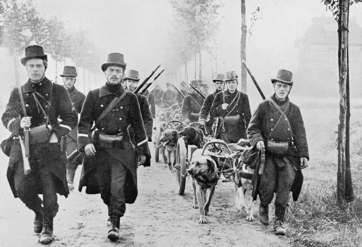 Belgian soldiers with dog drawn machine gun carts move up to oppose the advancing German Army at the start of the First World War. 1914.