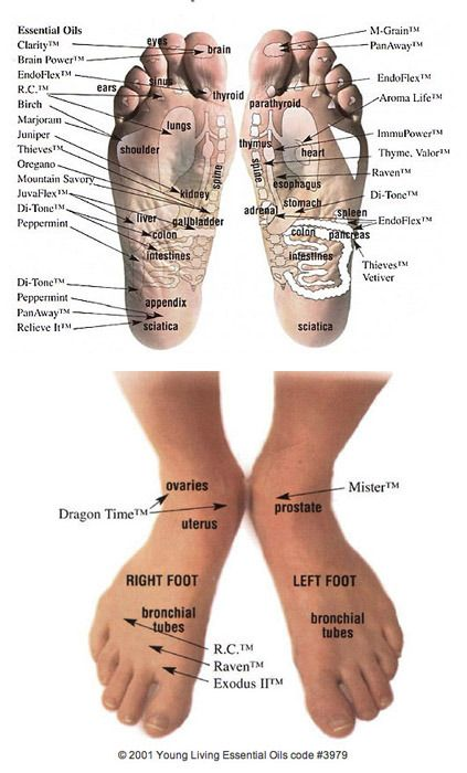 Foot chart of Vita Flex points on feet. Any oils applied to the feet are circulated through the body within 30 seconds!